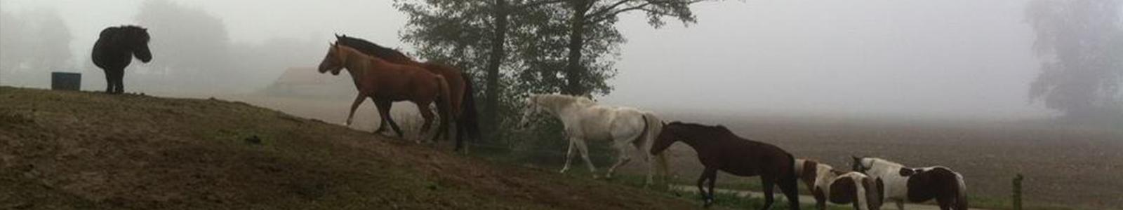 beuken-paarden-4