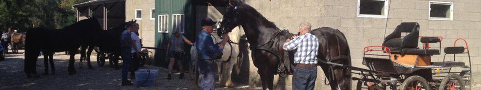 beukenhof-paarden3