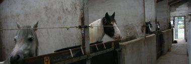 Paardenpension